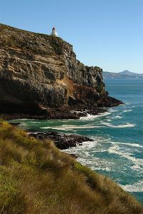Taiaroa Heads, Dunedin New Zealand